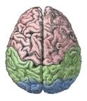 腦袋的頂觀
