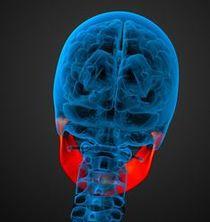 圖文:傾斜頭部/頸部/顳下頜關節