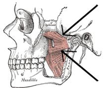格雷的解剖書:左外部和內部翼內肌