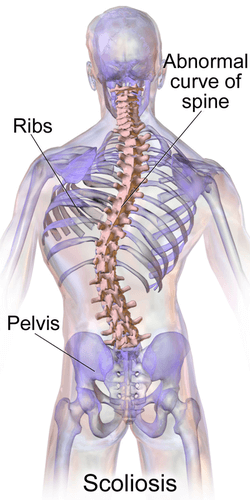 Gray's Anatomy plate|Median sagittal section of two lumbar vertebræ and their ligaments. Wiki