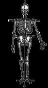 平衡的骨骼框架